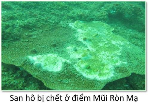 Bộ ảnh đáy biển miền Trung bị hủy diệt khiến ai cũng xót xa
