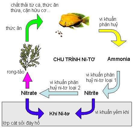 Xử lý nito trong nước thải và các phương pháp