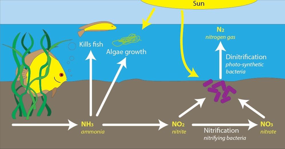 Xử lý nước nhiễm Nitrat, Nitrit, Amoniac